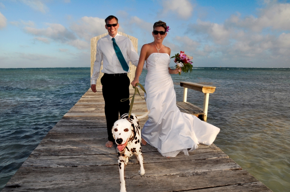 Spotty dog - Belize Wedding Photography