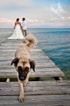 Destination Wedding Photographer in Belize – PhotographyBelize