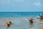 Belize-Destination-Wedding-Photographer-24